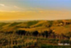 виноградные поля италия барбареско
