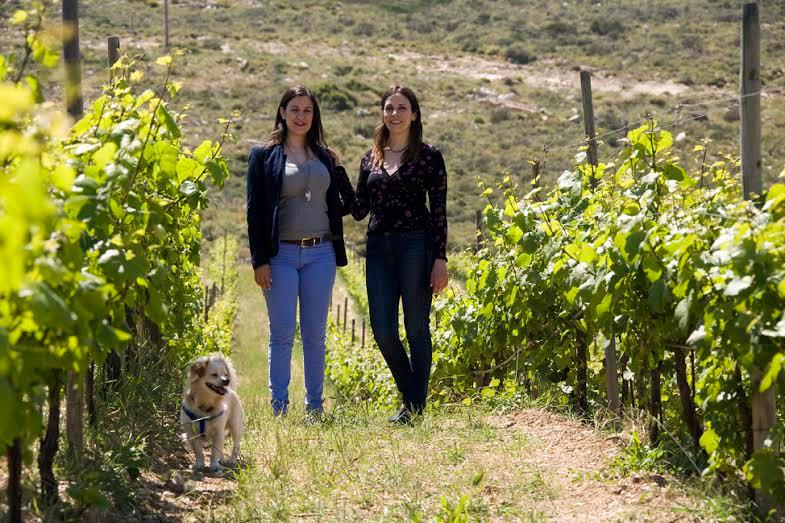 семья греческих виноделов Domaine Paterianakis