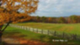 На фото: Клены на ферме Мадава