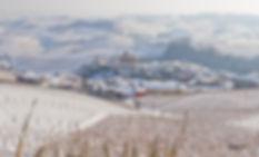 Виноградники Пьемонта зимой