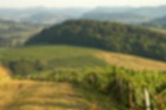 Винодельческий регион Жура Jura