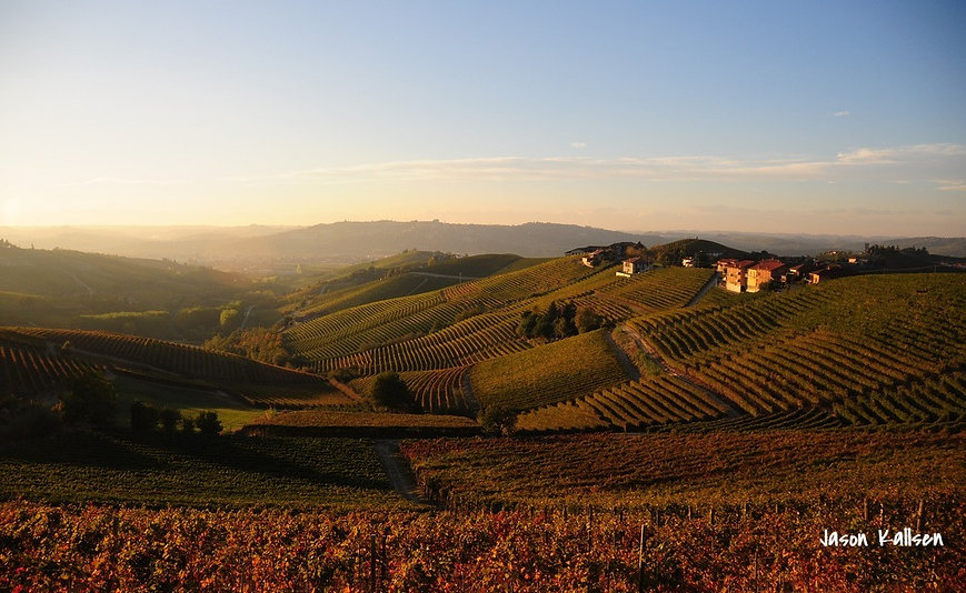 виноградники италии барбареско
