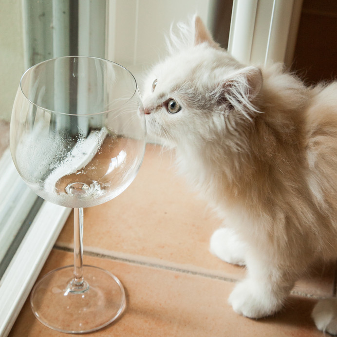 wine for cats MosCato