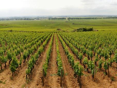 Шампань и Бургундия вошли в список Всемирного наследия ЮНЕСКО