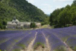 Лавандовые плантации
