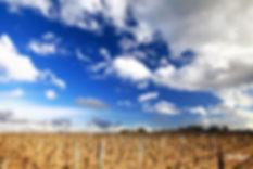На фото: виноградникиChateau d'Yquem