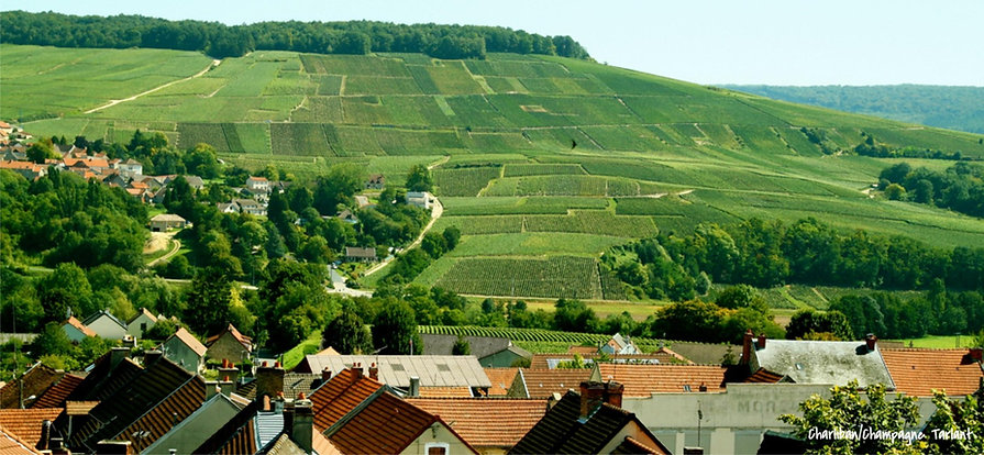 Виноградники региона Шампань Франция