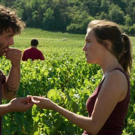 кадр из фильма Возвращение в Бургундию на винограднике