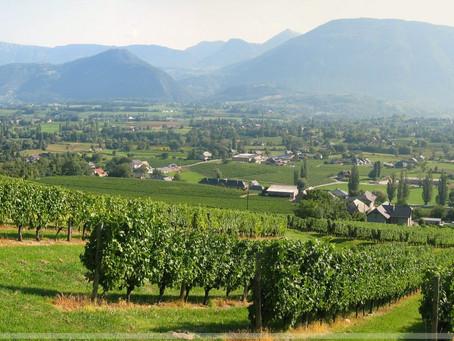 Французский сенат признал вино частью культурного наследия страны