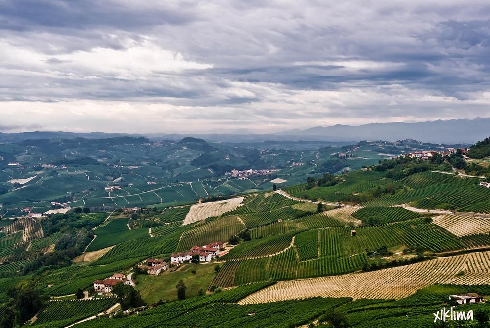 Виноградники Пьемонта Италия