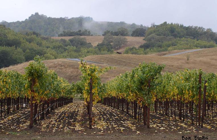 Виноградник из фильма «Прогулка в облаках»