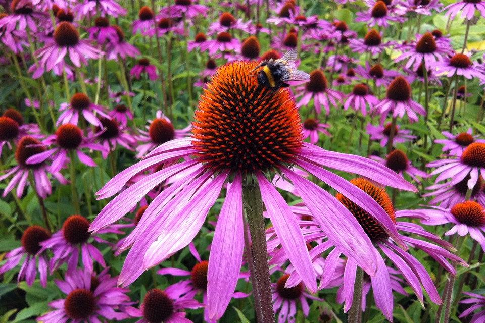 Follow up Naturopathic consultation