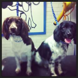 Tilly and Molly #springerday _ #springer