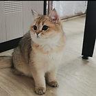 WhatsApp Image 2021-02-13 at 13.26.12.jp