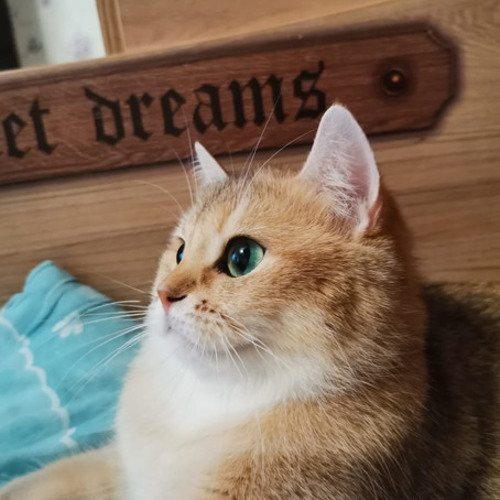 Пару видео из жизни золотых котят