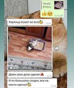 WhatsApp Image 2021-03-06 at 00.36.10.jp