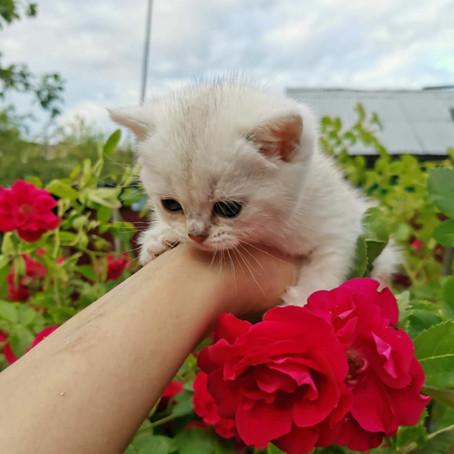 Фото - видео репортаж о котятах.