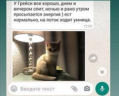 WhatsApp Image 2021-03-06 at 00.30.40.jp
