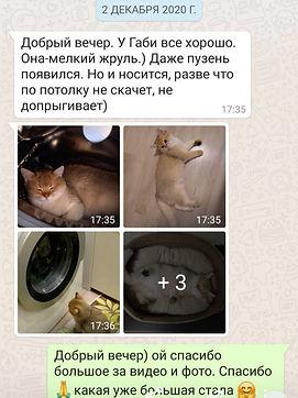 WhatsApp Image 2021-03-06 at 00.32.52.jp
