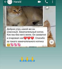 WhatsApp Image 2021-03-06 at 00.38.30.jp