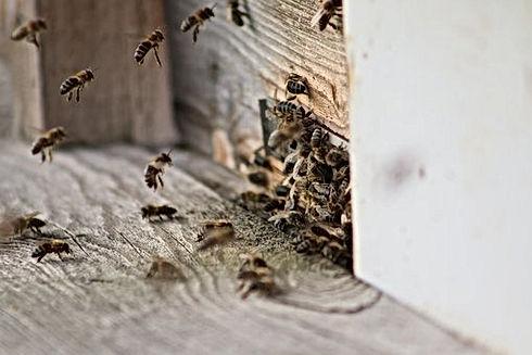 bee-honey-4210905__340.jpg