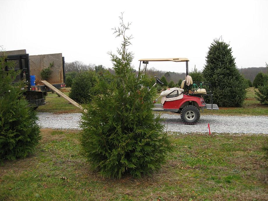 Terra Tree Farm Amp Nursery Christmas Trees Farm
