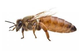 Цели пчеловодства