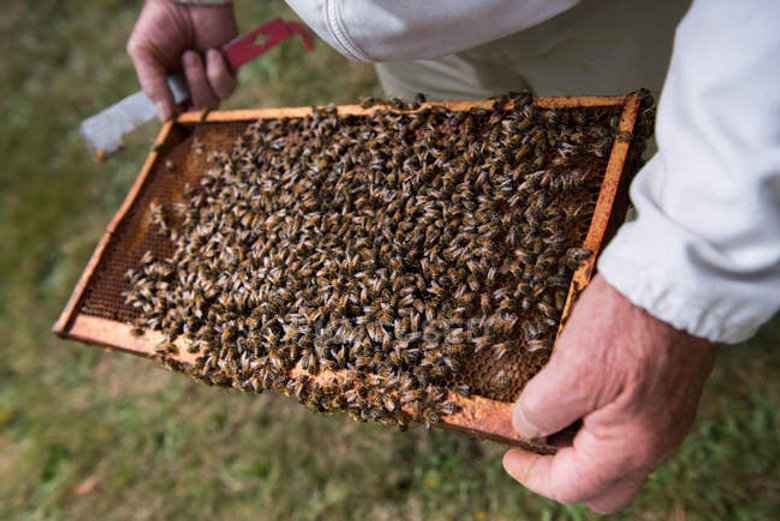 focused_228979092-stock-photo-beekeeper-