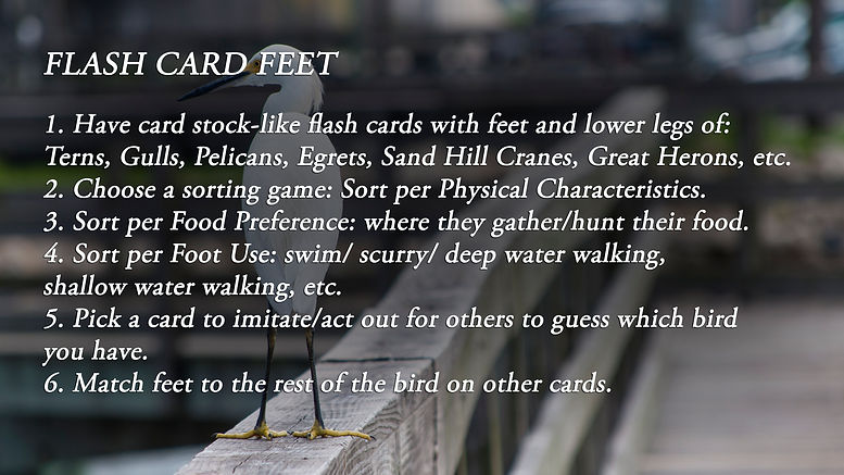 Flash Card Feet_v001.jpg