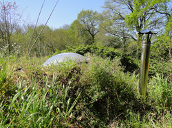 Love-shack's spring  vegetal dress