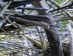 woven bamboos