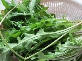 Dandelion as Herb | Easy Tea to Clear Fire