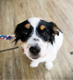 Anestesia e terapia del dolore negli animali da compagnia.