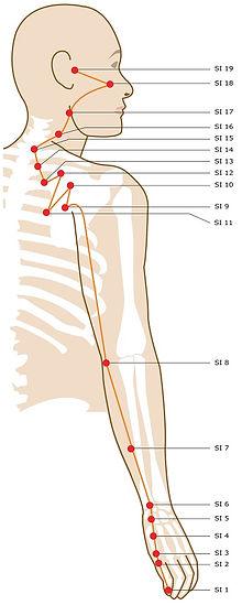 summer yoga, small intestine meridian