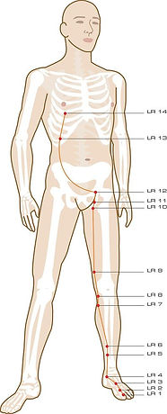 spring yoga, liver meridian