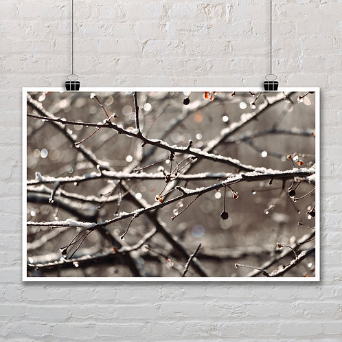 Frost on Twigs - Photo Printable
