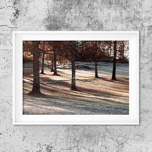 Autumn Morning - Photo Print