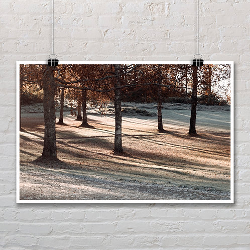 Autumn Morning - Photo Printable