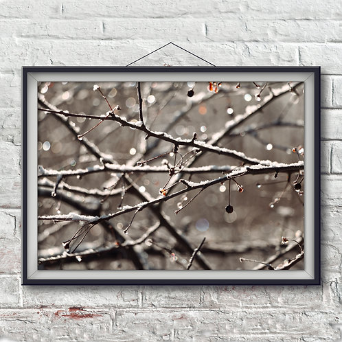 Frost on Twigs - Photo Print