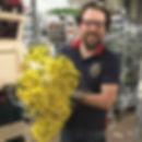 Federico - Atlas Planten Export
