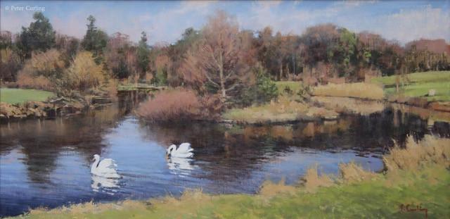 Swans on the Lake, Castle Howard