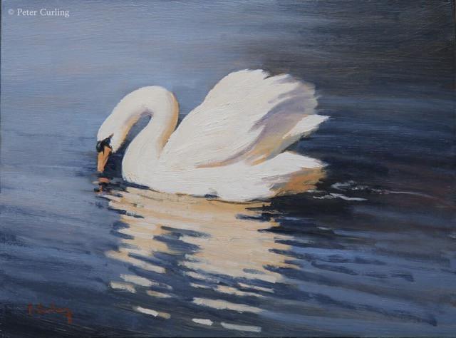Swan Study 2