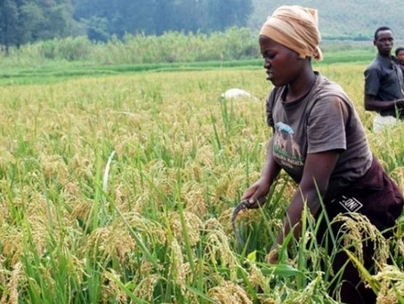 Only 6% of Africa's farmlands is irrigated; changing it will massively impact the entire continent
