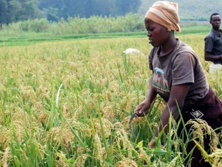 1 for 3000: The profession that could transform Africa's agriculture sector