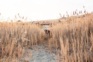 antelope island_nov2019-21.jpg
