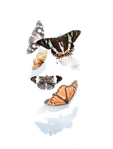 vlinder-vrijwilligers-zh.jpeg