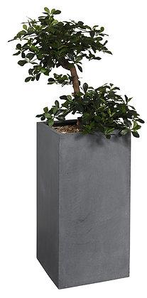 Plante bac MINERAL