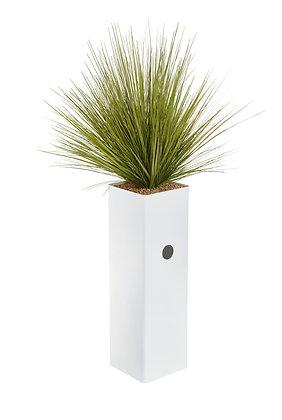Plante bac DESIGN