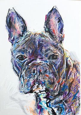 Mabel the French Bull Dog