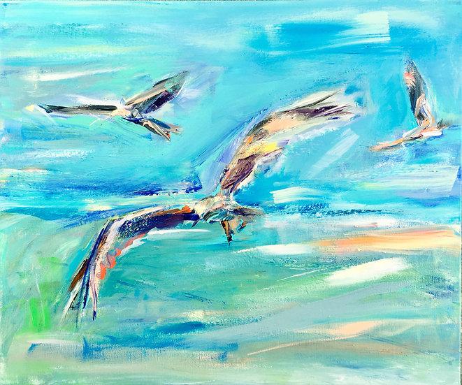 3 Red Kites